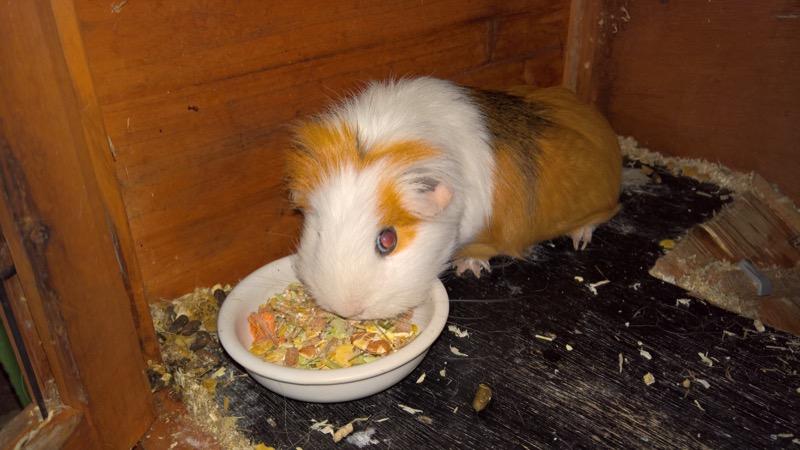 G Pig