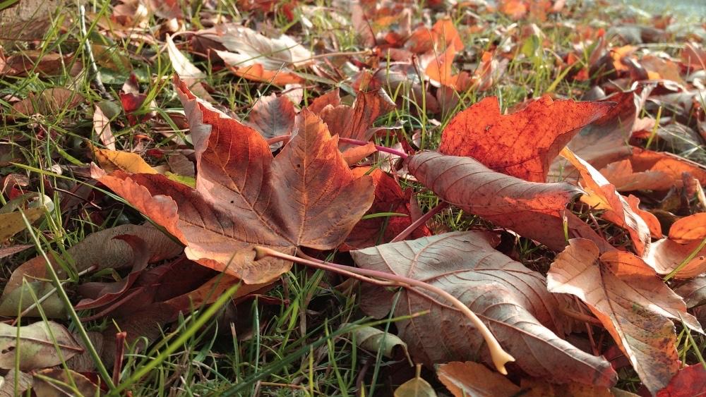 Final autumn