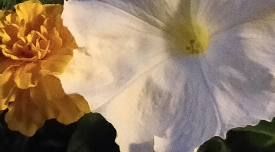 OnePlus 5 1:1 crop