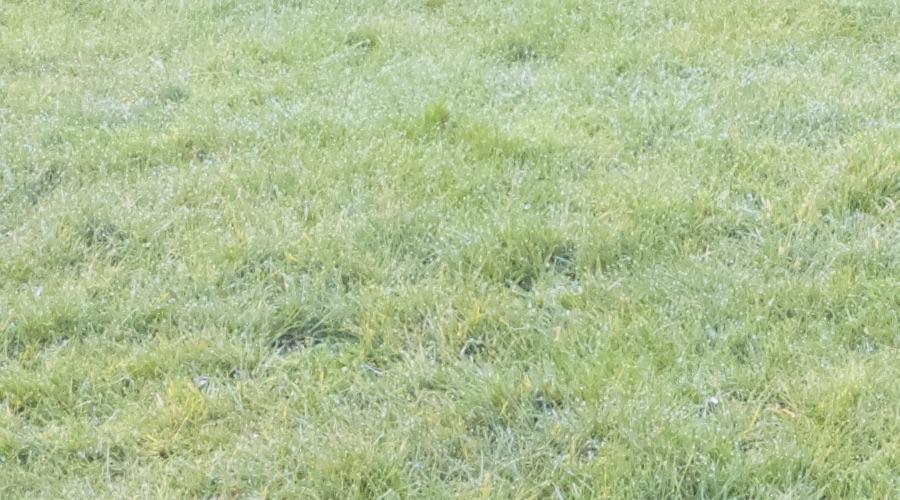 Lumia 950 XL 1:1 crop