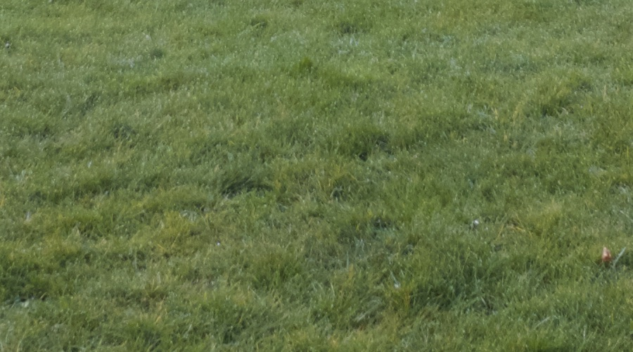 Galaxy S9 1:1 crop